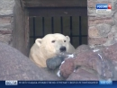 В Ленинградский зоопарк из Якутии прилетела белая медведица Снежинка