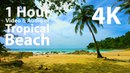 4K UHD - Beach, Lapping Waves, Birds Singing - mindfulness, relaxing, meditation, nature - 1 hour