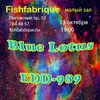 Blue Lotus & EDD-989 in Fish Fabrique 13.10.17.