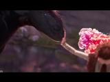 Джон и Дрогон/Беззубик и Викинг /Игра Престолов Game of thrones vine