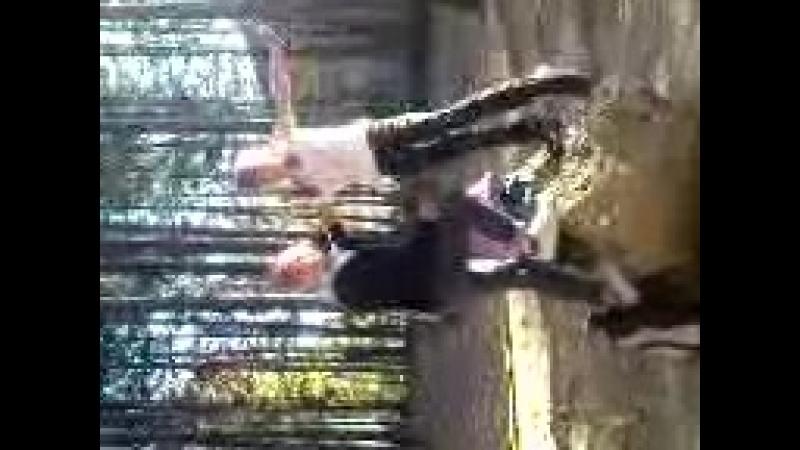 Лучшее видео 2009