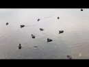 озеро Карасун Краснодар