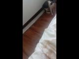 Котик испугался