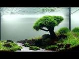 Кристально чистая вода в аквариуме, причины по которым вода мутнеет. Секреты акв...