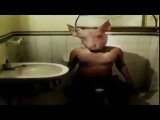 Death In June All Pigs Must Die