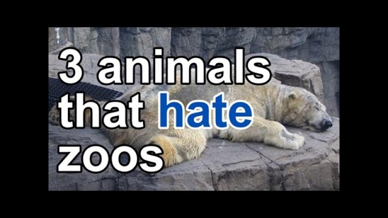 Zoos drive animals insane