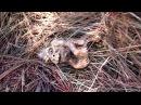 Зародыш снежного человека нашли в лесу Новости криптозоологии: news/zarodysh_snezhnogo_cheloveka_nashli_v_lesu/2018-06-25-14346