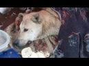 🛑 Пёс Лежал И Еле Заметно Водил Глазами 😥 Кто Стрелял В Беззащитную Собаку Неизвестно