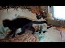 Играю с кошками. 4K 38402160 30 fps