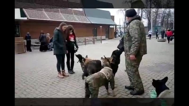 Собаки приюта Верность на Колхозке (прямая трансляция 22 нояб. 2017г.)