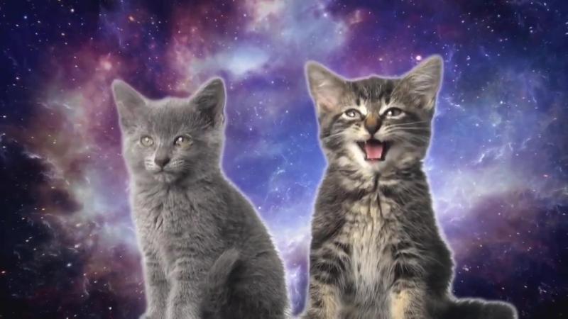 поющие_коты_!_супер_прикол_HD