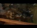 Черепахи-крупно