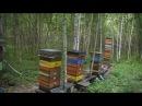 Пчёлы в УДаве 1.08.16 (5)заключение