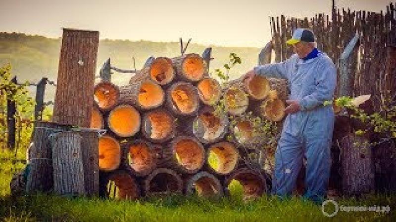 Добыча бортевого мёда в Башкортостане