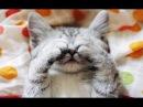 Смешные животные до слез видео с котами приколы с кошками 2018 9 Тест на психику Без монтажа