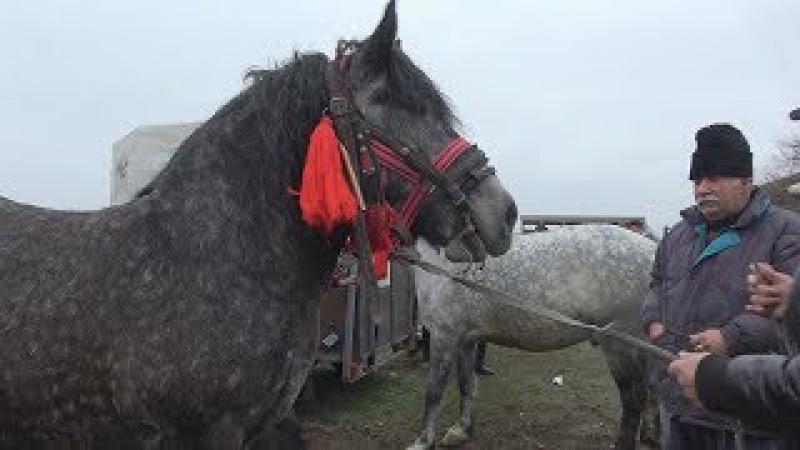 Targul de cai de la Hateg Hunedoara 6 dec 2017