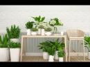 ТОП-10 лучших БЫСТРОРАСТУЩИХ комнатных растений