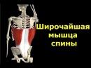 Пулловер Верхняя тяга Как правильно проработать широчайшую мышцу спины