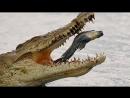 Содержание крокодилов урегулируют в Госдуме