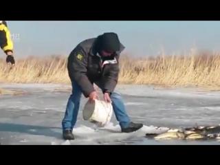 Зимой рыба даже на ведро клюёт