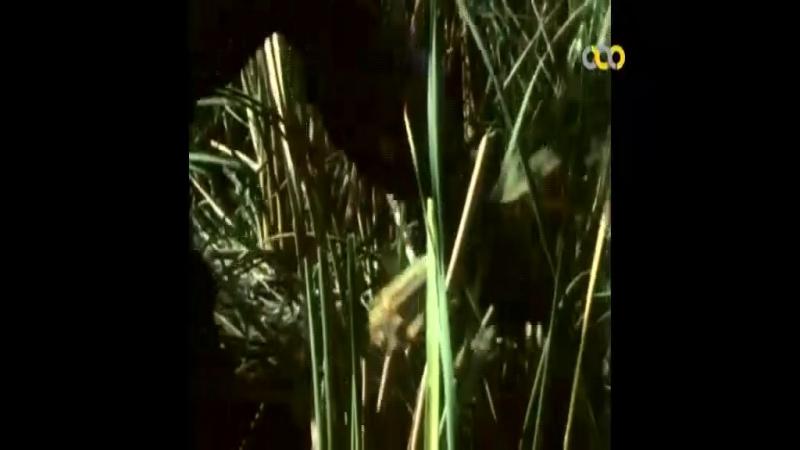 Bache ha dar hoor bazi mikonand [Farzad Motamen, 1997]