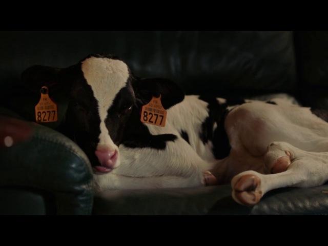 Мелкий фермер Petit paysan 2017 трейлер