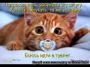 Смешные картинки про кошек и котят Выпуск № 26 FUNNY CATS СМЕШНЫЕ КОШКИ