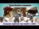 Смешные приколы про кошек и собак. Такие милые и смешные 28