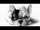 how to draw dog - come disegnare un cane (bulldog francese/French Bulldog)