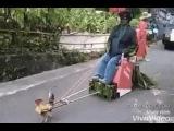 Raja Riding cock