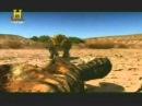The History Channel Luta Jurássica A Última Batalha do Raptor Parte V