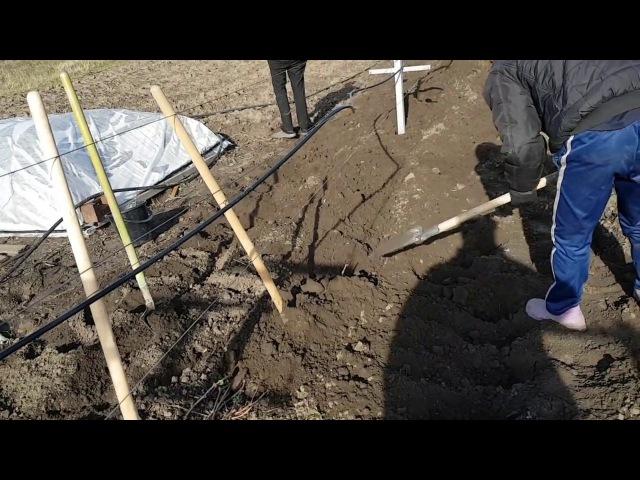 Виноград. Укрытие на зиму землёй и шифером. Обработка ЖК перед укрытием.