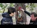 Святой Николай Новый из Вунен. Кровотечение деревьев. Фильм 2