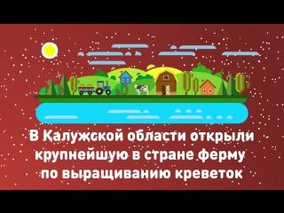 ТОП самых ярких достижений страны за 2017 год  - В Калужской области открыли крупнейшую в стране ферму по выращиванию креветок