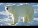 Глоба П П Белый медведь 30 й градус Водолея