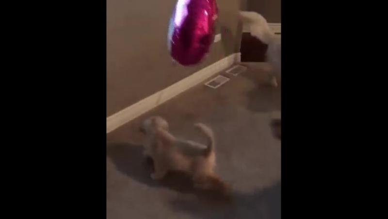 Мам, ну скажи папе, чего он...Это же мой шарик