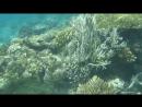 Мой подводный мир Красного моря 3