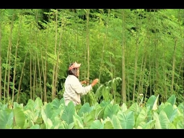 Moringa Documentary - the 'miracle' tree