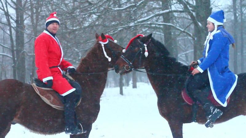 С Новым годом от конного клуба Центавр