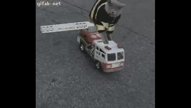 Телефон службы спасения 911