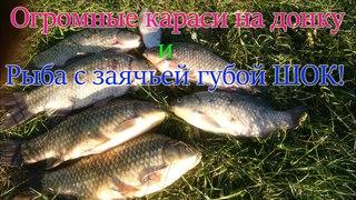 Ловля ОГРОМНЫХ КАРАСЕЙ - КАБАНОВ что ломают спиннинги на донку. OnlyFishing рыбалка