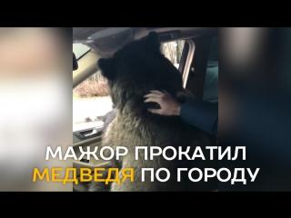 Мажор прокатил медведя на своем «Мерседесе»