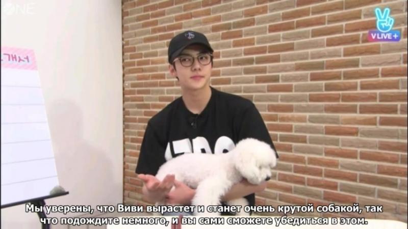 [Рус.суб.] Сехун EXO Please Take Care of My Puppy Эп.1