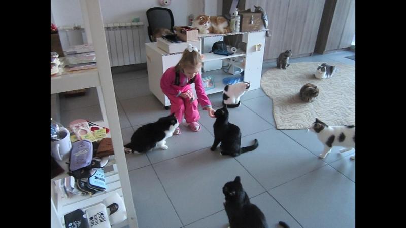 Кафе Котейная Уфа. Здесь за полгода нашли семью 75 котеек.