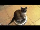 Кот и робот-пылесос Победила дружба