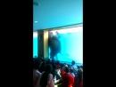 шоу слонов под водой