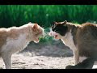 Fight school carmen after mccarthy cat