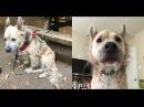 """У этого пса много странностей – поэтому его называют """"оборотнем""""!"""