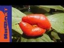 Растения и грибы, похожие на человеческие органы
