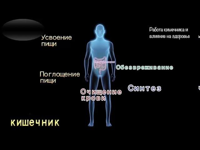 Здоровый кишечник - основа хорошего иммунитета!
